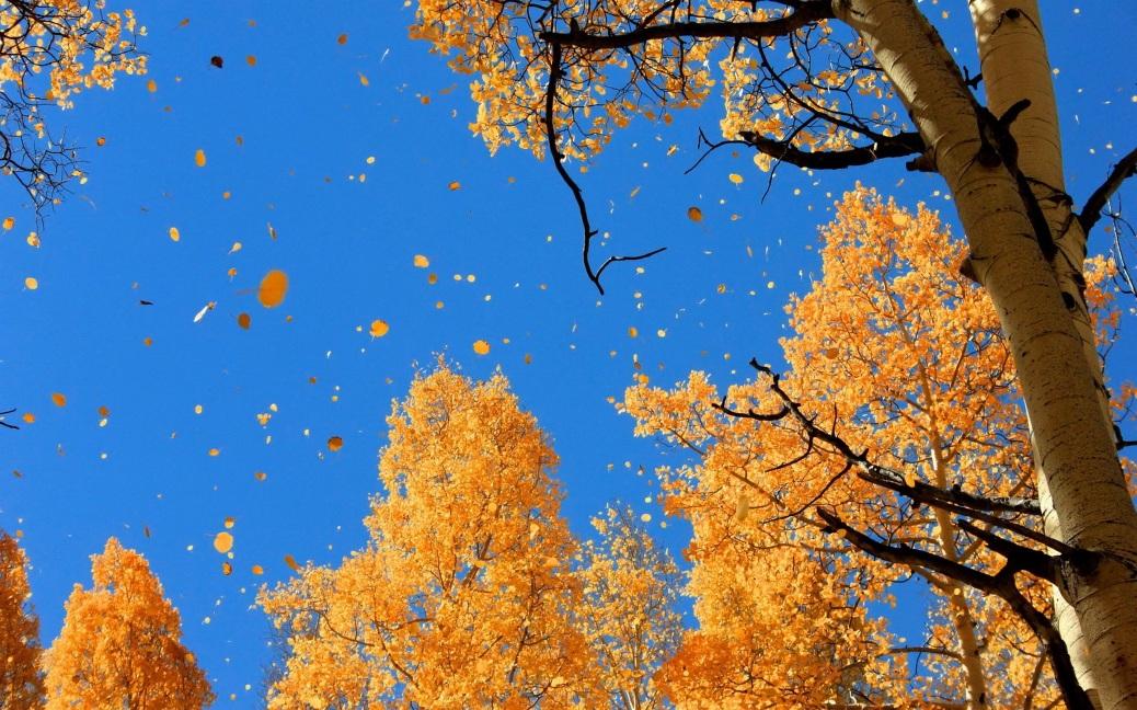 6948074-autumn-sky-wallpaper